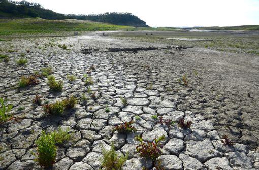 Kalifornier sollen 15 Prozent weniger Wasser verbrauchen