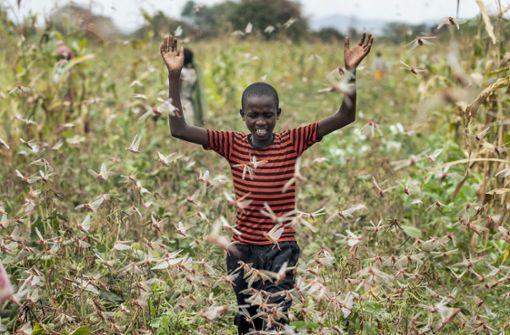 Ostafrika im Sturm der Insekten