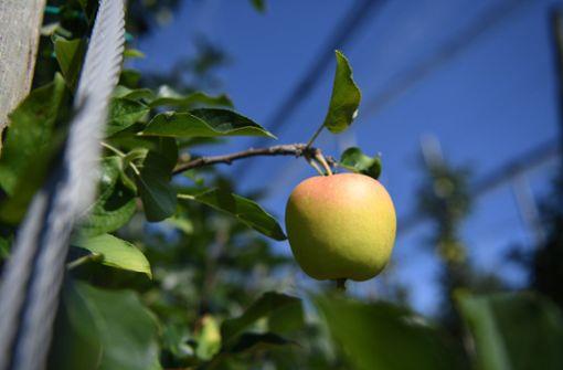 Mann stirbt bei Apfelernte durch Stromschlag