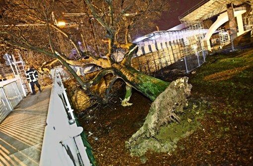 Der Baum ist auf den Steg gefallen, der über die Bahnhofsbaustelle führt. Foto: 7aktuell.de/Eyb