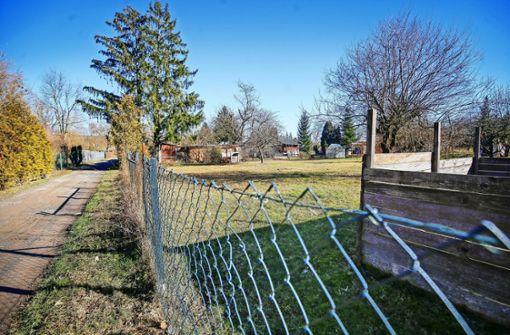 Gartenbesitzer verliert  vor Gericht