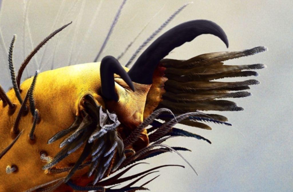 Haarige Haftpolster an den Spinnenbeinen halten die Beute fest. Foto: Wolff
