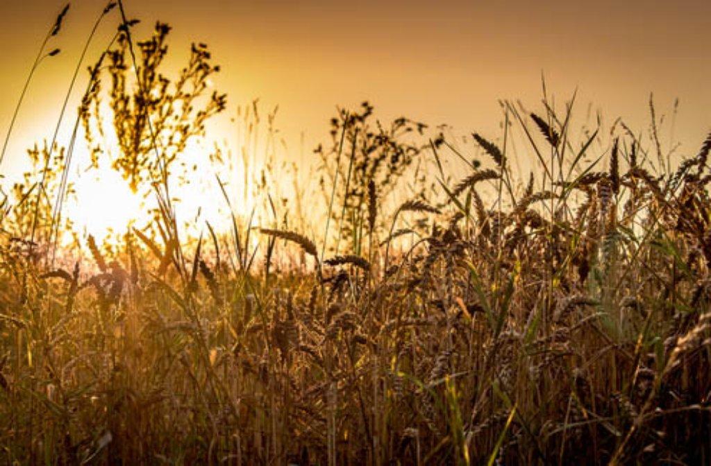 Der Spätsommer zeigt sich in seiner vollen Pracht, auf den Feldern... Foto: Leserfotograf ulivonboedefeld