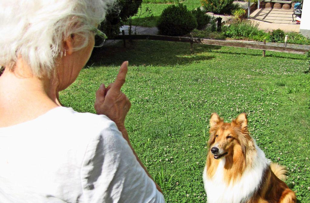 In der Tierschutz-Hundeverordnung ist etwa geregelt, wie viel Auslauf ein Hund braucht, und dass man sich mehrmals am Tag mit ihm beschäftigen muss. Foto: Claudia Barner