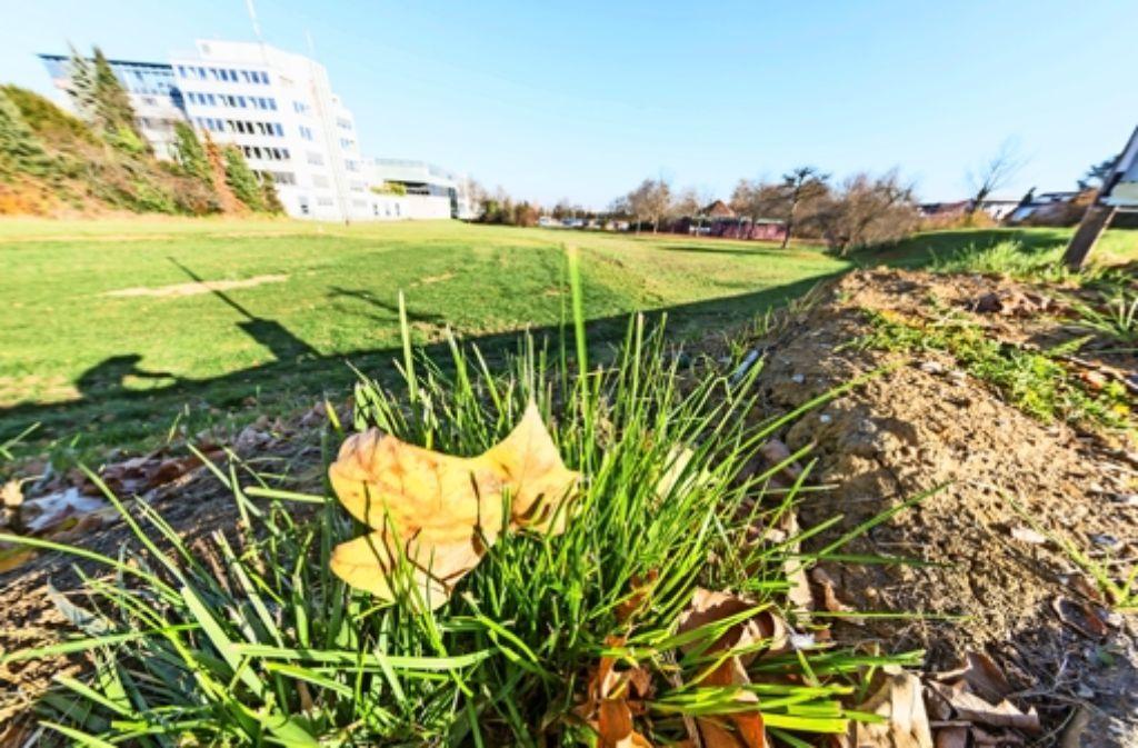3,8 Millionen Euro Kosten für die Freiflächengestaltung im Gebiet Schelmenäcker wollte der Technische Ausschuss des Gemeinderats nicht ausgeben. Bürgermeisterin Eva Noller will die Planung nun überarbeiten lassen. Foto: Thomas Krämer