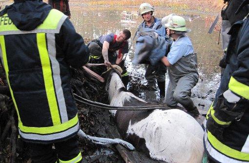 Feuerwehr rettet Pferd aus einem See