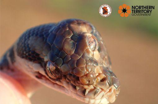 Dreiäugige Schlange  entdeckt