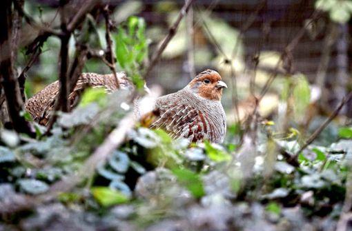 Verzweifelter Kampf gegen Artensterben