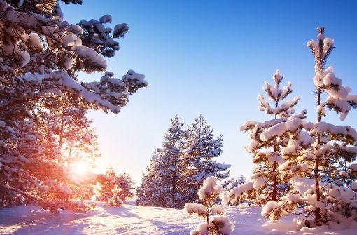 Praxistipps für beeindruckende Fotos im Schnee
