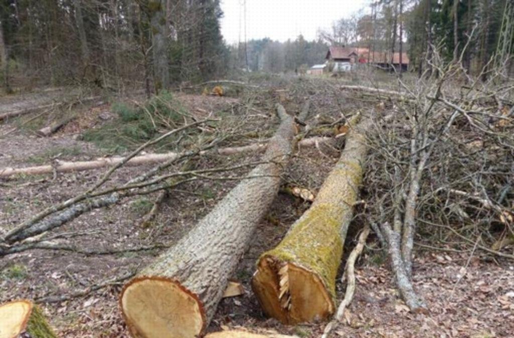 Die Bahn hat rund 40 Bäume fällen lassen. Foto: z/Yvonne Jelting