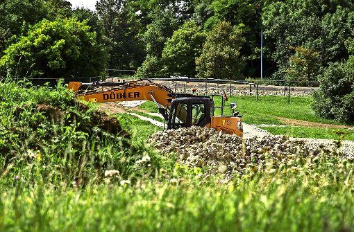 Die Wiesen der Feuerbacher Heide am Killesberg sollen die neue Heimat der Eidechsen aus Untertürkheim werden. Foto: Lichtgut/Leif Piechowski