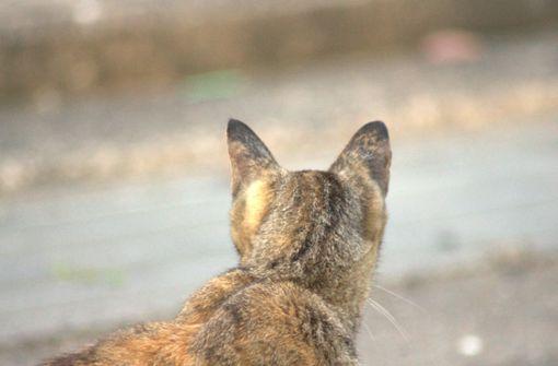 Unbekannte schießen mit Luftgewehr auf Katze