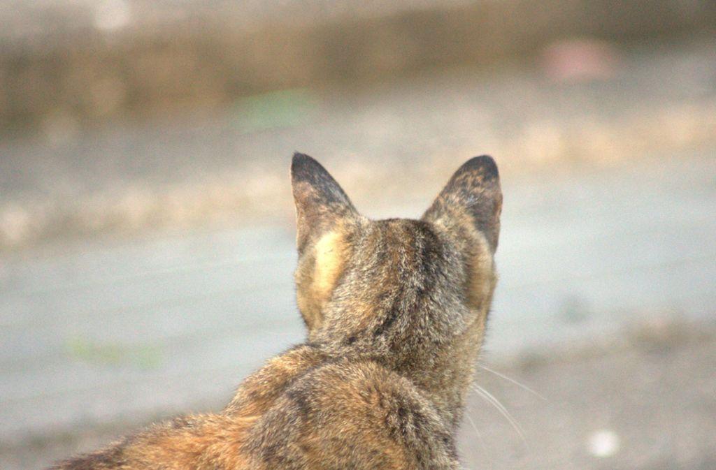 Eine Katze ist in Öhringen von Unbekannten beschossen worden. (Symbolbild) Foto: Shutterstock/Nyansuke1155