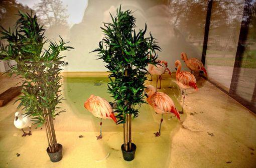 Darum sind die Flamingos am Killesberg im Winterquartier