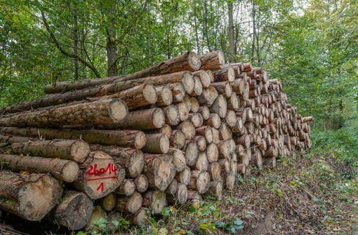 Darum wird im kommenden Jahr weniger Holz geschlagen