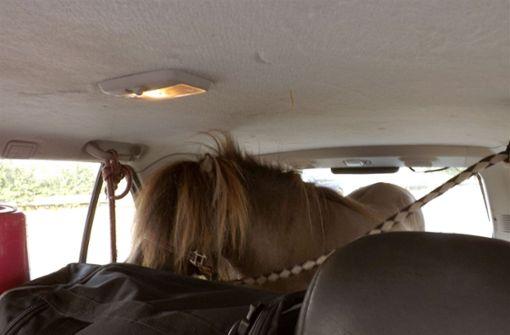 Polizei stoppt Auto mit Shetland-Pony im Kofferraum