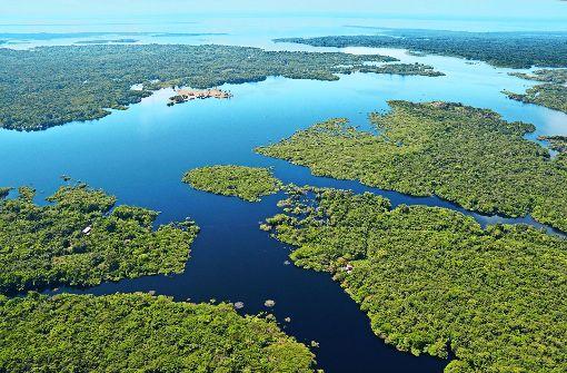 Das Amazonasgebiet ist heute weitgehend menschenleer. Das war nicht immer so, wie die Häufung von Nutzpflanzen  an manchen Stellen des Urwalds zeigt. Foto: AFP, Mauritius