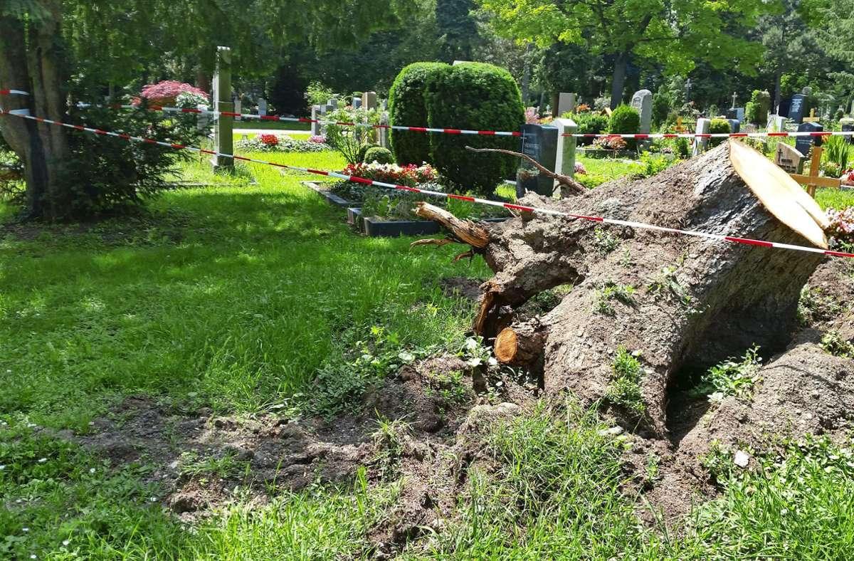 Umstürzende Bäume haben auch Gräber beschädigt. Bislang wurden auf dem Pragfriedhof insgesamt neun Bäume gefällt. Foto: /Eva Funke