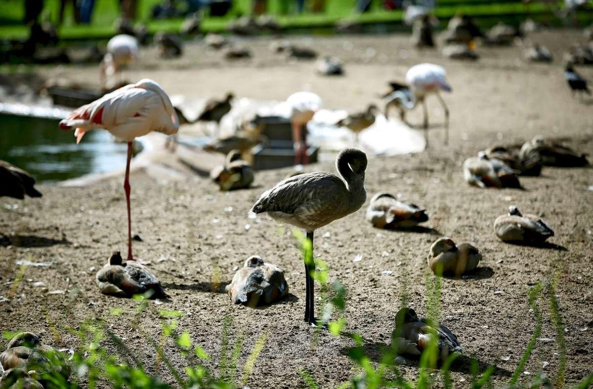 Flamingos im Wartestand Foto: Lichtgut/Julian Rettig Foto:
