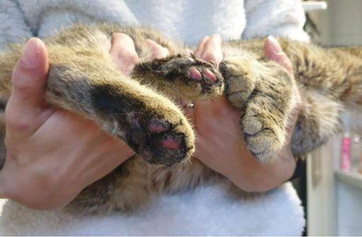 Kinder sollen Katzenpfoten mit Böllern verbrannt haben