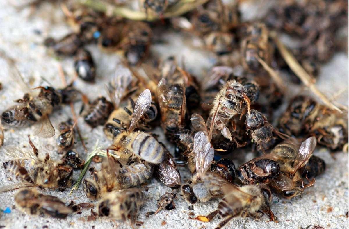 Tote Bienen – Insektenforscher warnen vor drastischem Artensterben auch in Baden-Württemberg. (Archivbild) Foto: dpa/A3446 Patrick Seeger