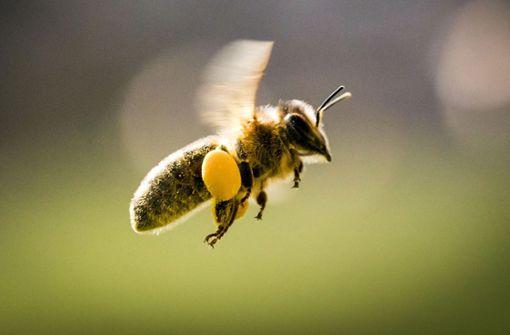 Bienen-Angriff bei Geburtstagsfeier – Fünf Kinder im Krankenhaus