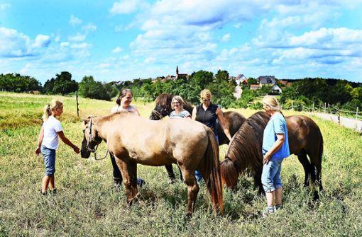 Vier bis fünf Gänge auf dem Pferderücken