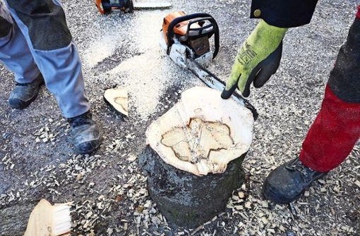 Abgesägte Baumscheibe dient als  Beweisstück
