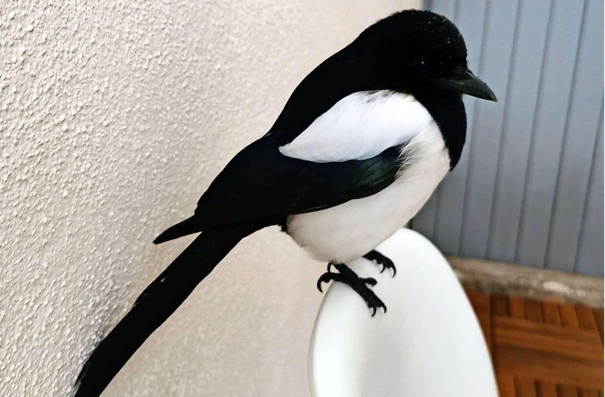 Der Vogelexperte gibt auch den Elster-Freunden einen Rat. Foto: privat