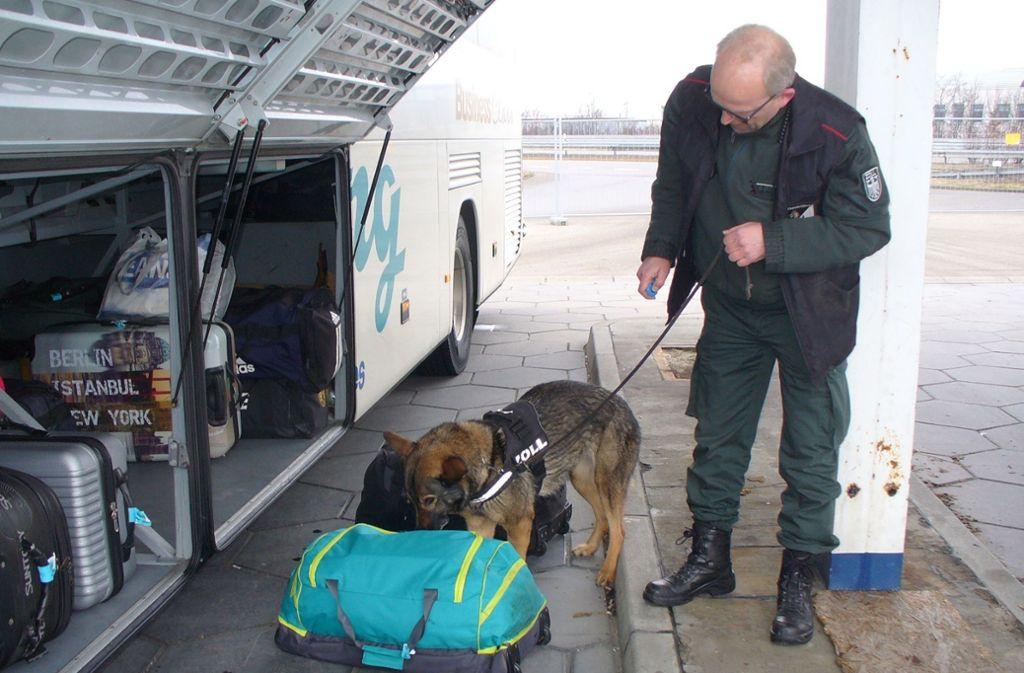 Drogenspürhund Vicky fand knapp zwölf Kilo Rauschgift im Gepäck des Fernbusses. Foto: Hauptzollamt Ulm