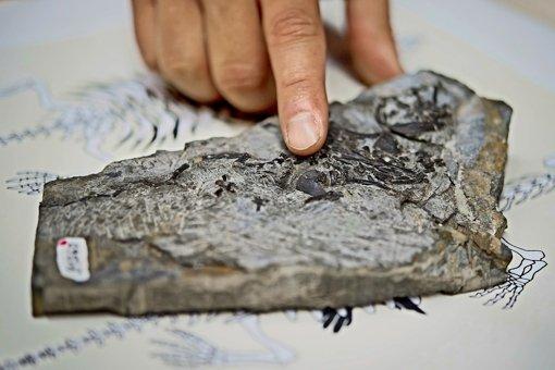 Das große Knochenpuzzle der Urschildkröte