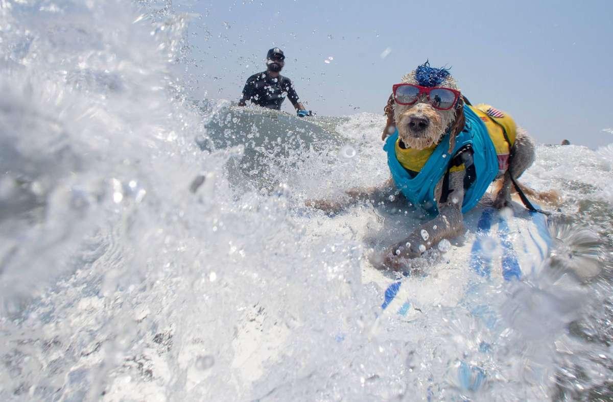 """Ein Teilnehmer beim """"Surf Dog-A-Thon"""" surft im lässigen Outfit eine Welle. Foto: imago/ZUMA Press/imago sportfotodienst"""