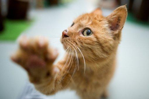 Sieben Dinge, die alle Katzen-Besitzer kennen