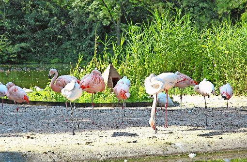 Flamingos bleiben unter Quarantäne