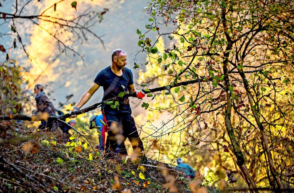 In aufwändiger Handarbeit haben die Helfer das  zwei Hektar große Waldstück  im Naturschutzgebiet  Oberes Lenninger Tal  ausgelichtet. Foto: Michael Steinert