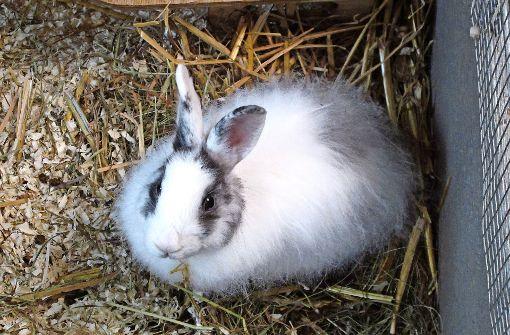 In den Ferien wird das Kaninchen lästig