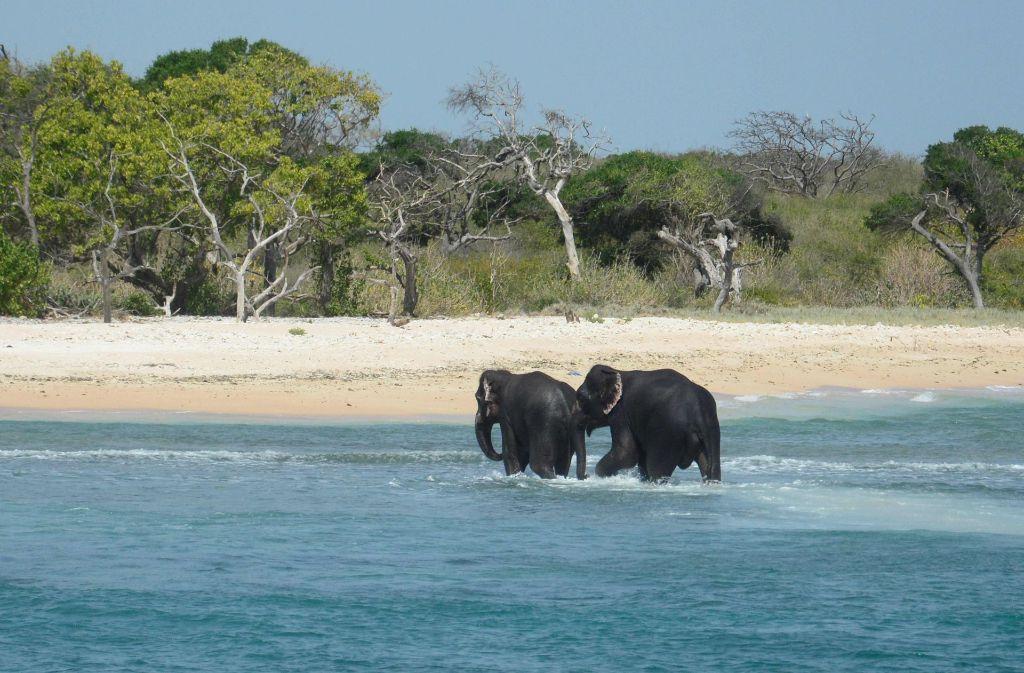 """Die Marine Sri Lankas hat zwei Elefanten aus """"Seenot"""" gerettet und ans Land gezogen. Von dort liefen die Tiere eigenständig zurück an Land in Richtung Dschungel. Foto: AFP"""