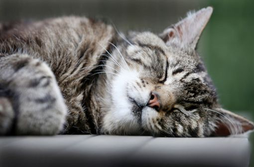 Wilder Streit um Nachbars Katze – die Polizei nimmt es mit Humor