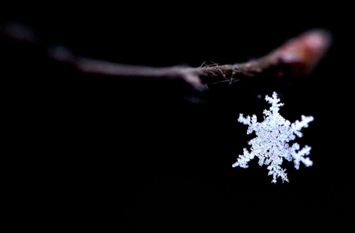 Ein Schneekristall hat sich  in einer Spinnwebe an einem Ast verfangen. Foto: Ralf Hirschberger/dpa
