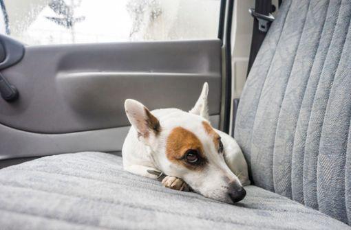 Hund bei brütender Hitze in Wohnmobil eingesperrt