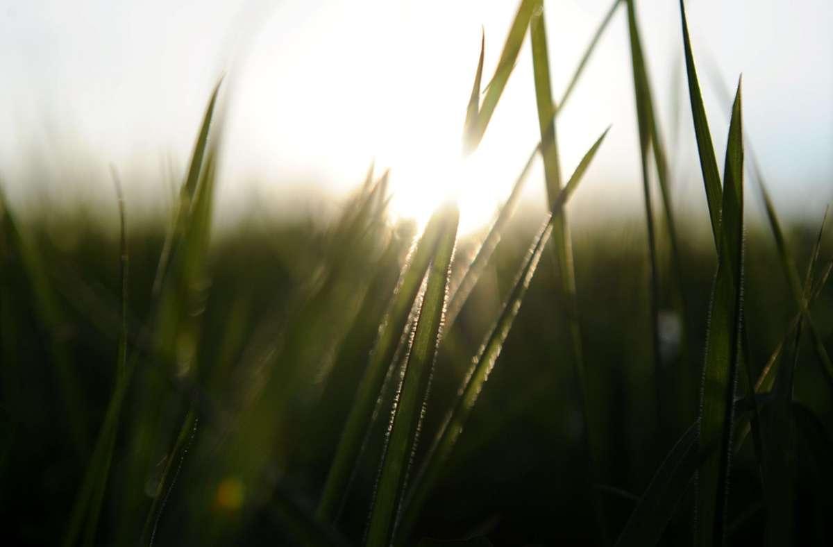 Der Altweibersommer bringt warme, sonnige Tage und mildere Nächte. Foto: dpa/Angelika Warmuth
