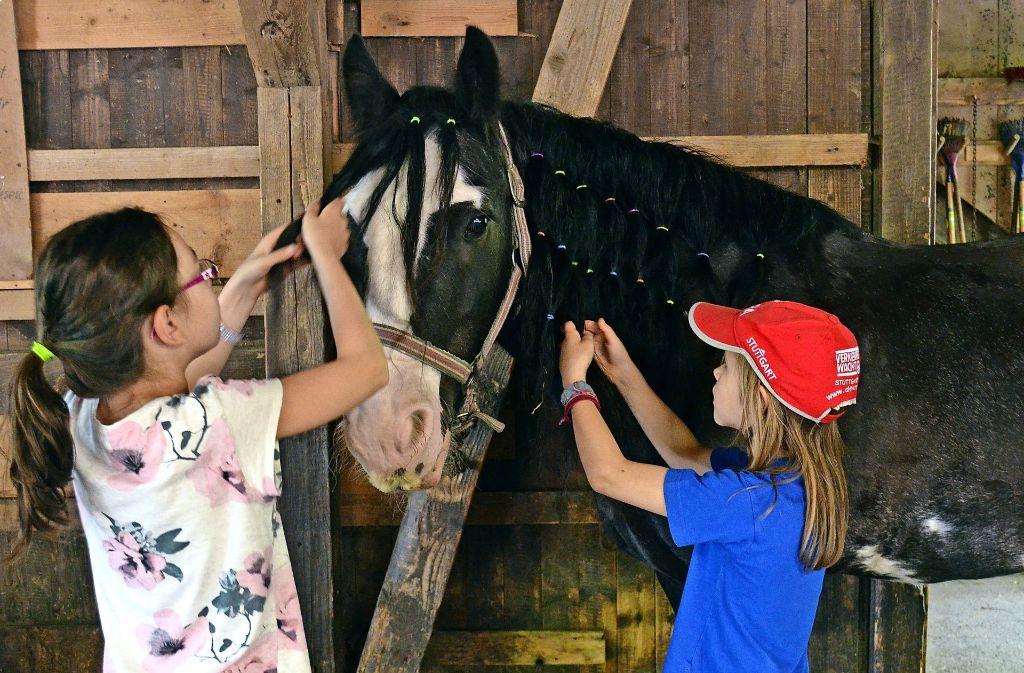 Die Mädchen auf der Jugendfarm konnten beim Pferdefrisiertag mit bunten Haargummis und Bürsten die Ponys herrichten. Foto: Wiebke Wetschera