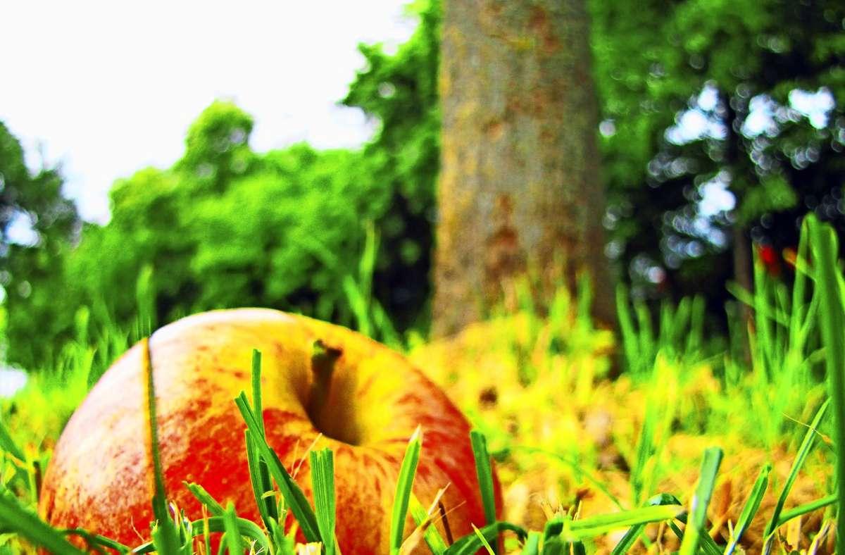 Zu schade fürs Verfaulen? Filderstadt hilft, an Gratis-Obst zu kommen. Foto: Sägesser