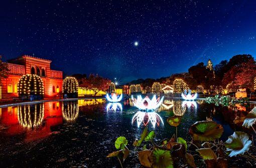 Auch in diesem Jahr wird die Wilhelma wieder beim Christmas Garden Stuttgart in vorweihnachtlichen Lichterzauber gehüllt sein.