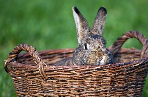 Unbekannter köpft Kaninchen