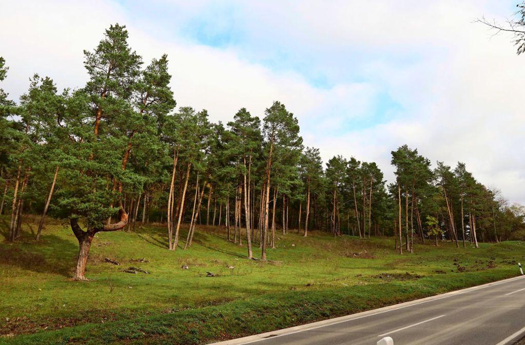 Der Betzenbuckel ist als Naturschutzgebiet bekannt. Foto: Andreas Gorr