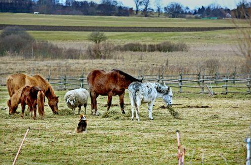 Gnadenbrot-Herde droht die Vertreibung