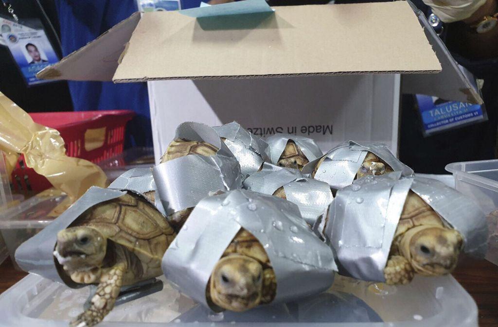 Der Zoll am Flughafen in Manila entdeckte in mehreren Koffern über 1500 Schildkröten. Foto: Bureau of Customs Public Informa