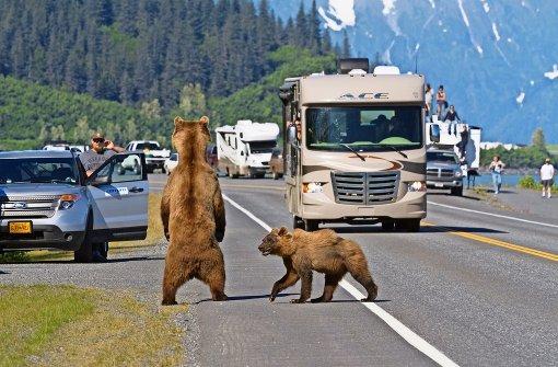 Bär im Auto gefangen