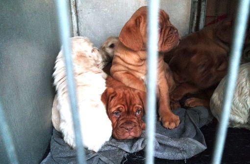 42 Hundewelpen aus illegalem Tiertransport in desolatem Zustand